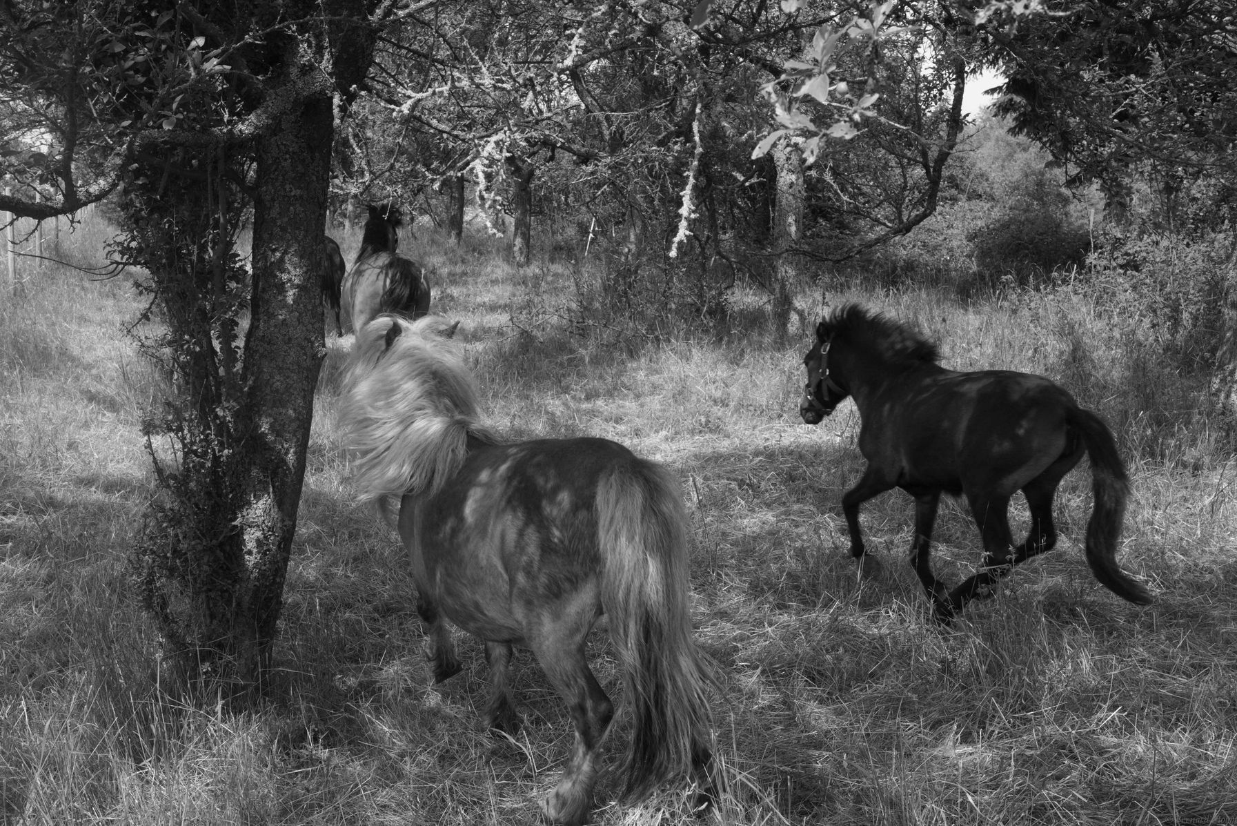 PHOTOGRAPHIER LES PONETTES, MARMOUTIER, ALSACE