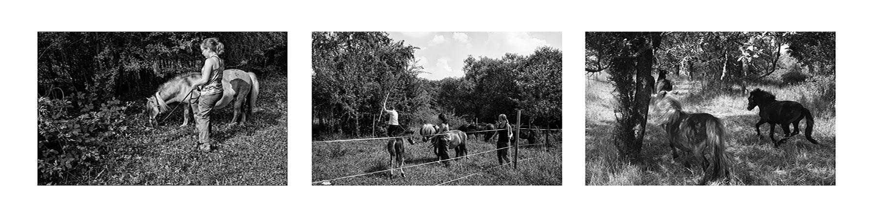 Les poneytes (ÉTHOLOGIE-CNRS STRASBOURG)